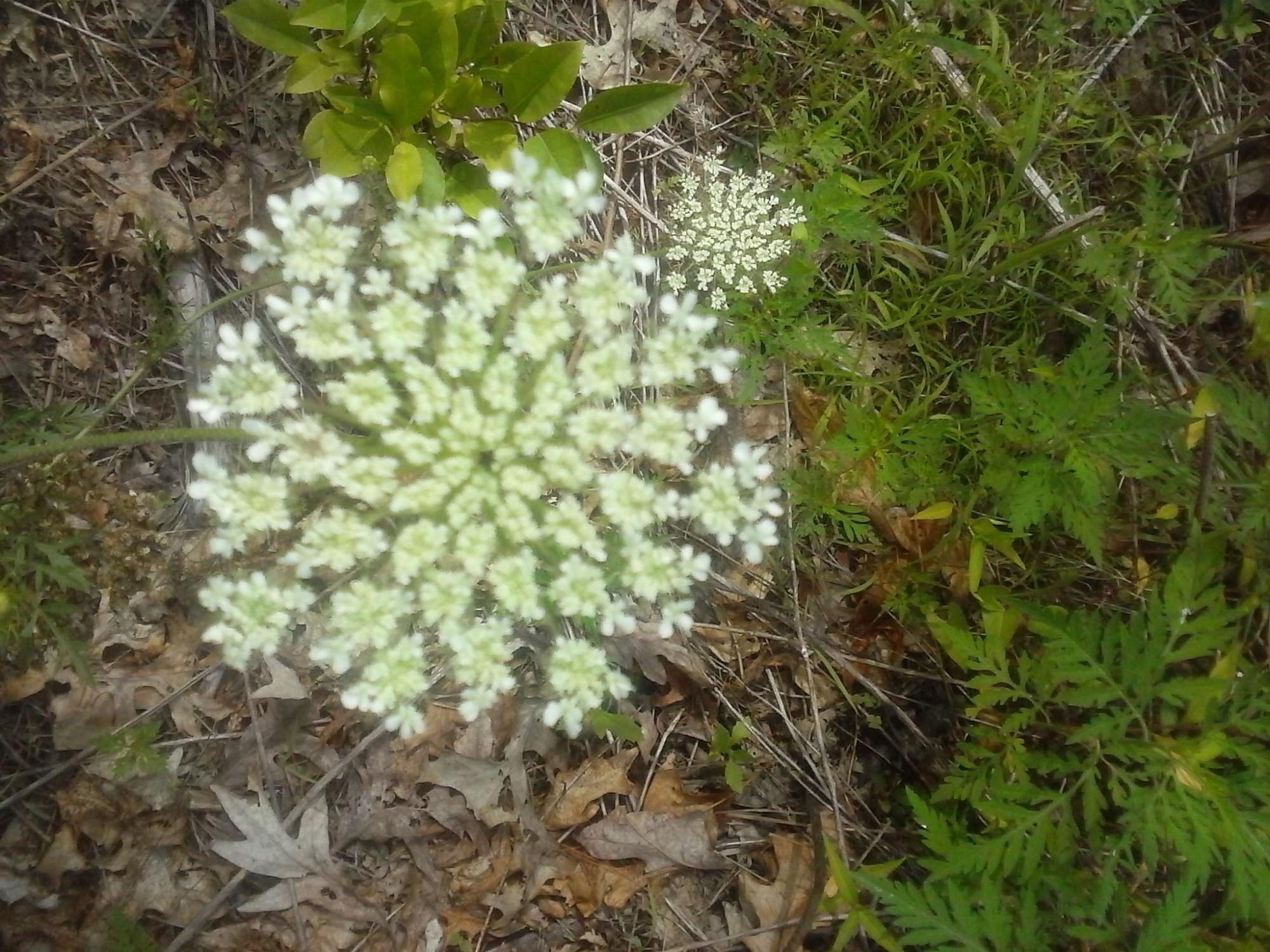 Healing Salves Wildlettucegals Blog